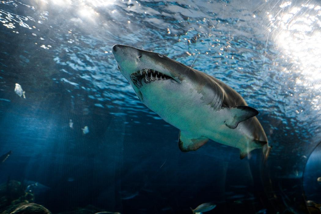Radio Lessons #109 – Jaws